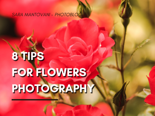 8 Tips for Flowers Photography